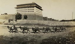 A Bactrian camel train outside the Peking city walls. Photograph taken by Dr.Peake